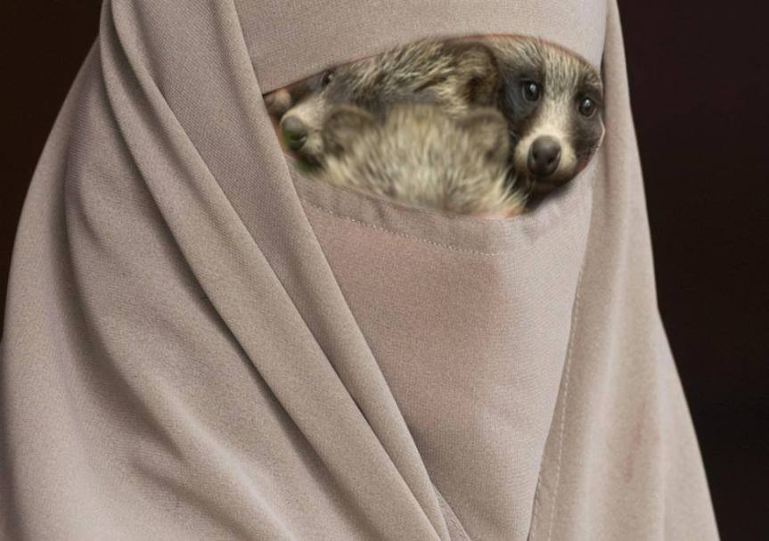 SECURITY ALERT: 1% Of Niqabs Are Hiding A Stack Of Clever Raccoons