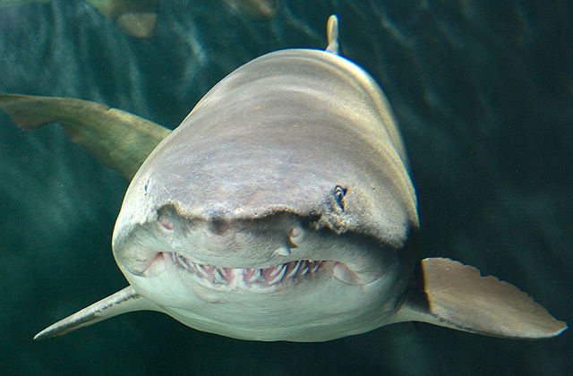 "87% of sharks identify as ""chubby chasers"""